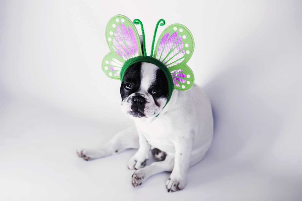 dog in tiara with identity crisis